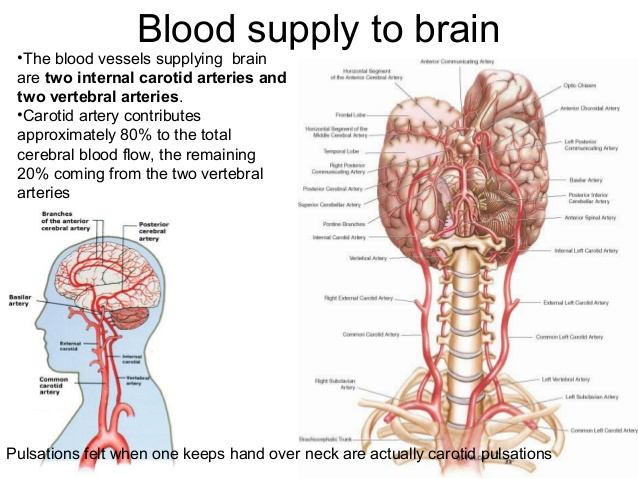 blood-supply-of-brain-3-638